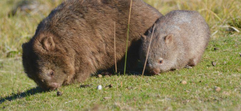 Premier Travel Tasmania - Conservation 02