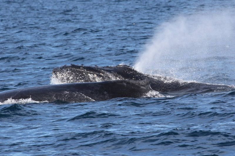 Blog 160618 - Humpbacks