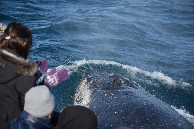 Blog 160618 - Humpbacks 03
