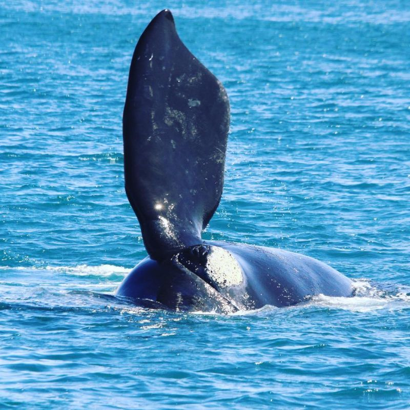 Blog 160618 - Humpbacks 12