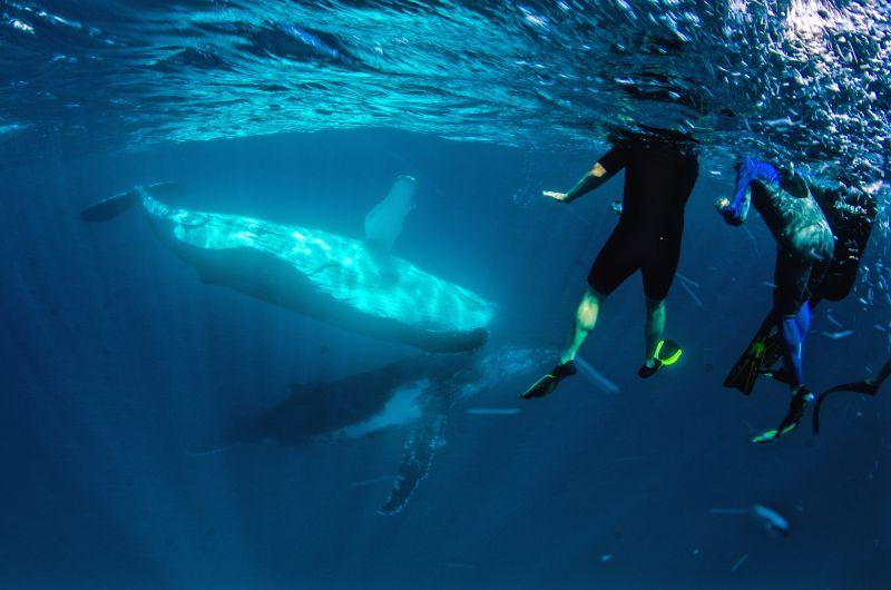 Humpback Whale Swim and Watching 02