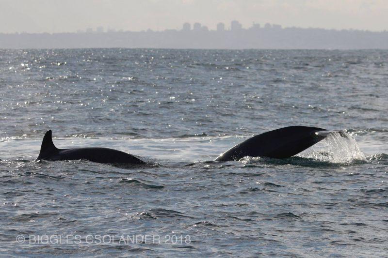 Orca Blog 130718 02