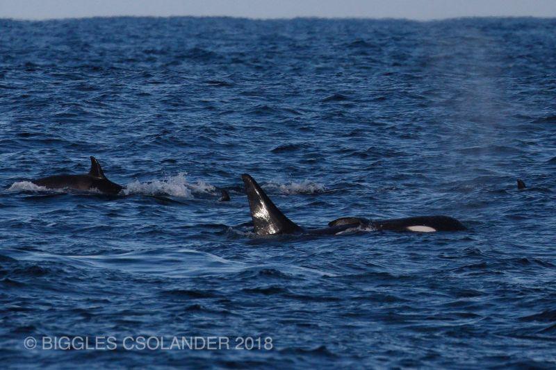 Orca Blog 130718 04