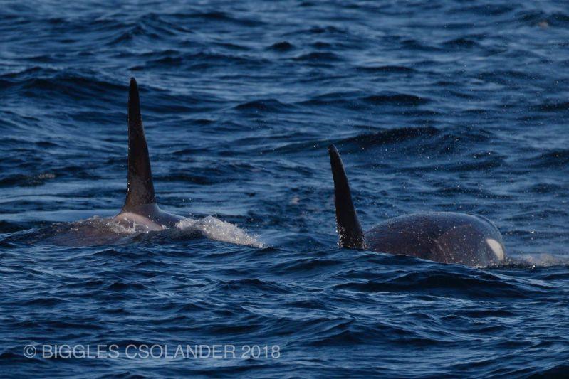 Orca Blog 130718 05