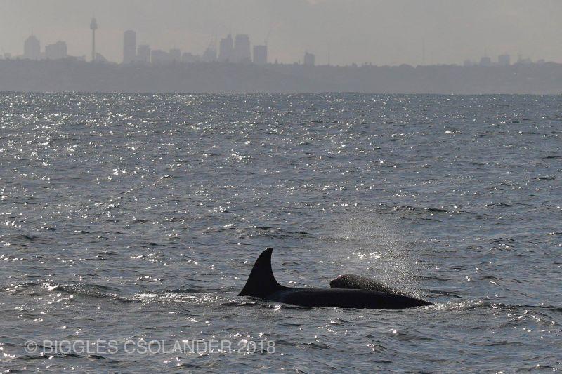 Orca Blog 130718 06