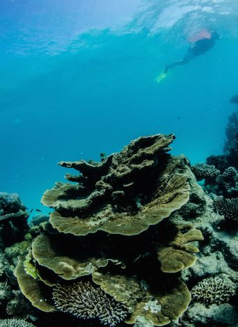 Snorkelling Tips Blog 01