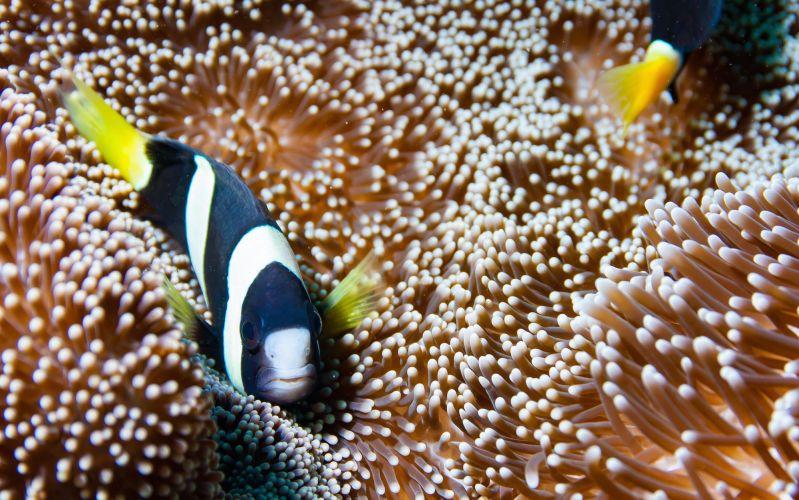 Snorkelling Tips Blog 02