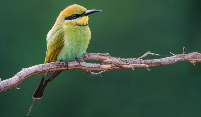 FNQ Birding - 02