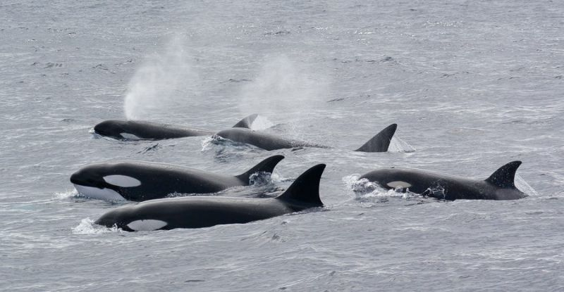 Whale Calve Blog 01