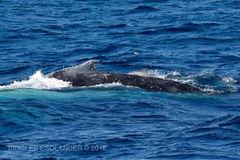 Whale Calve Blog 02