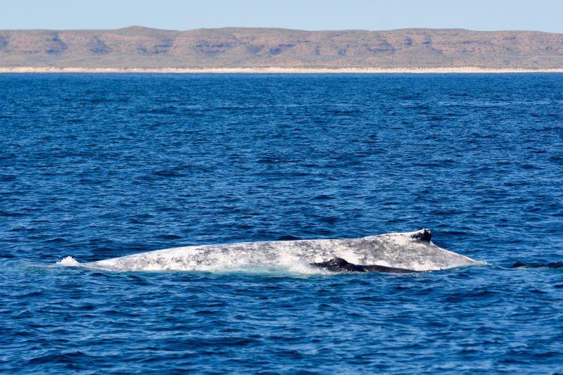 Whale Calve Blog 03