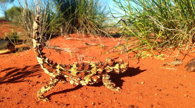 Lizards Blog 01