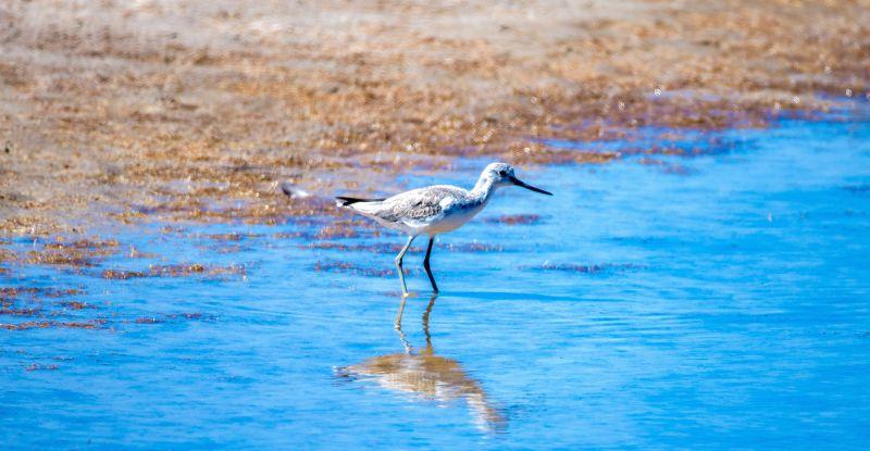 Migratory Birds Blog 01