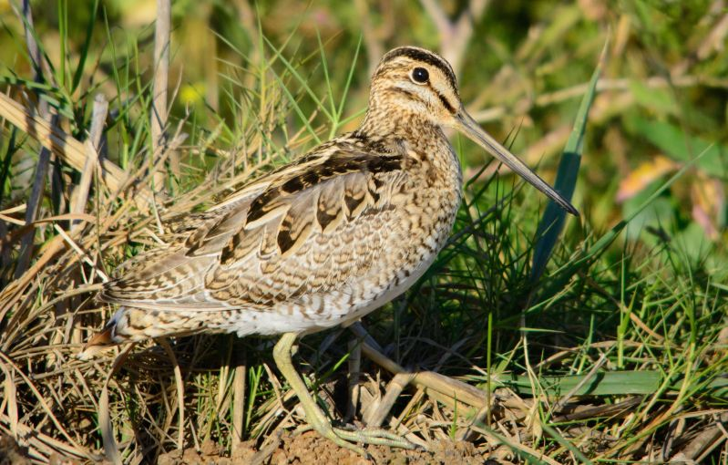 Migratory Birds Blog 02