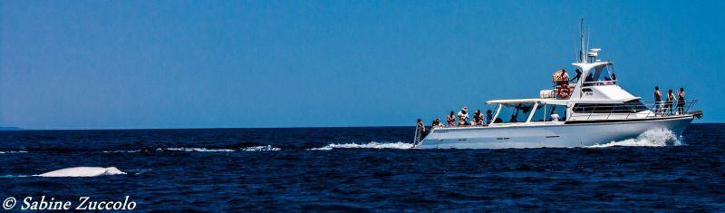 Albino Whale Blog 04