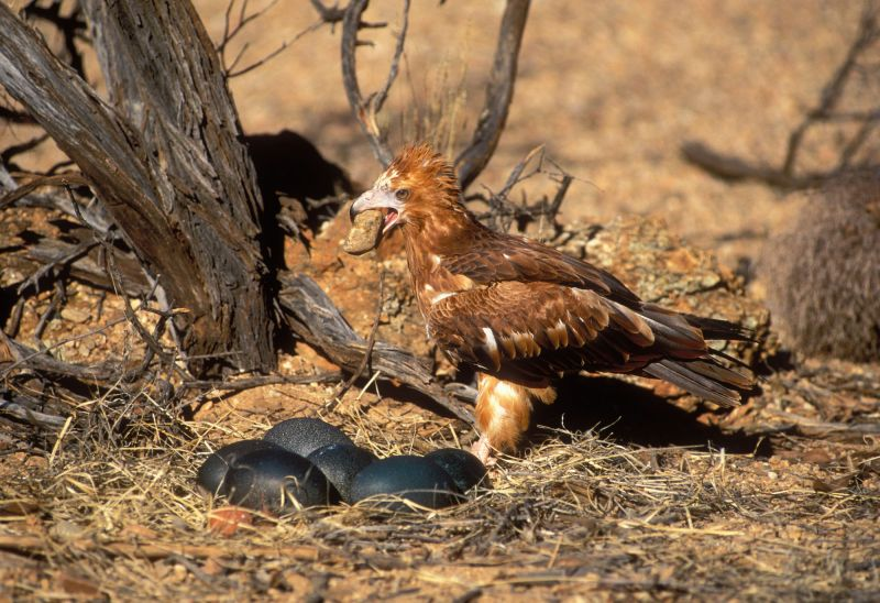 Blog - Quirkiest Birds