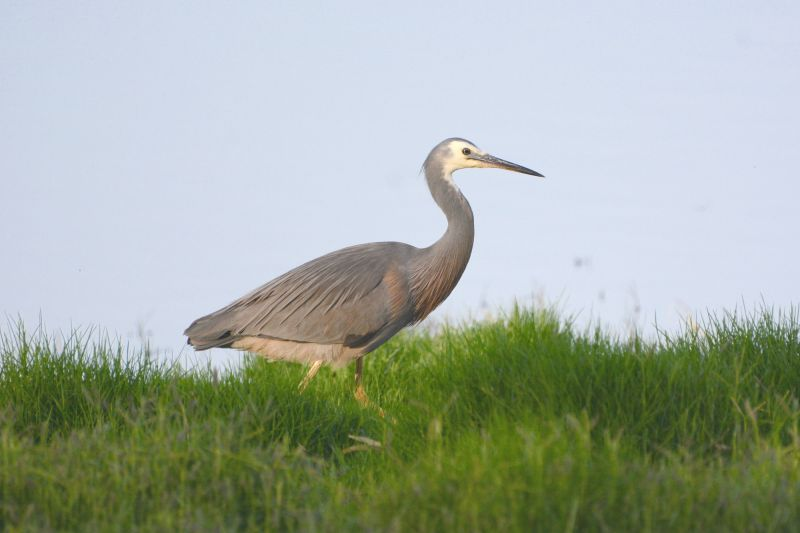Eyre Peninsula Birding - Hero 05