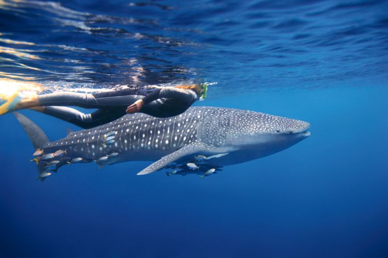 Whale Shark Tour - Hero 01