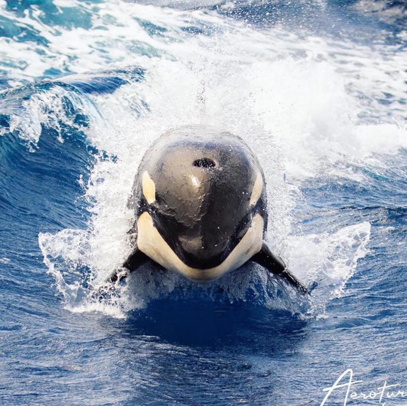 Orca-Feb