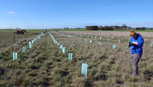 Tree Planting Blog 04