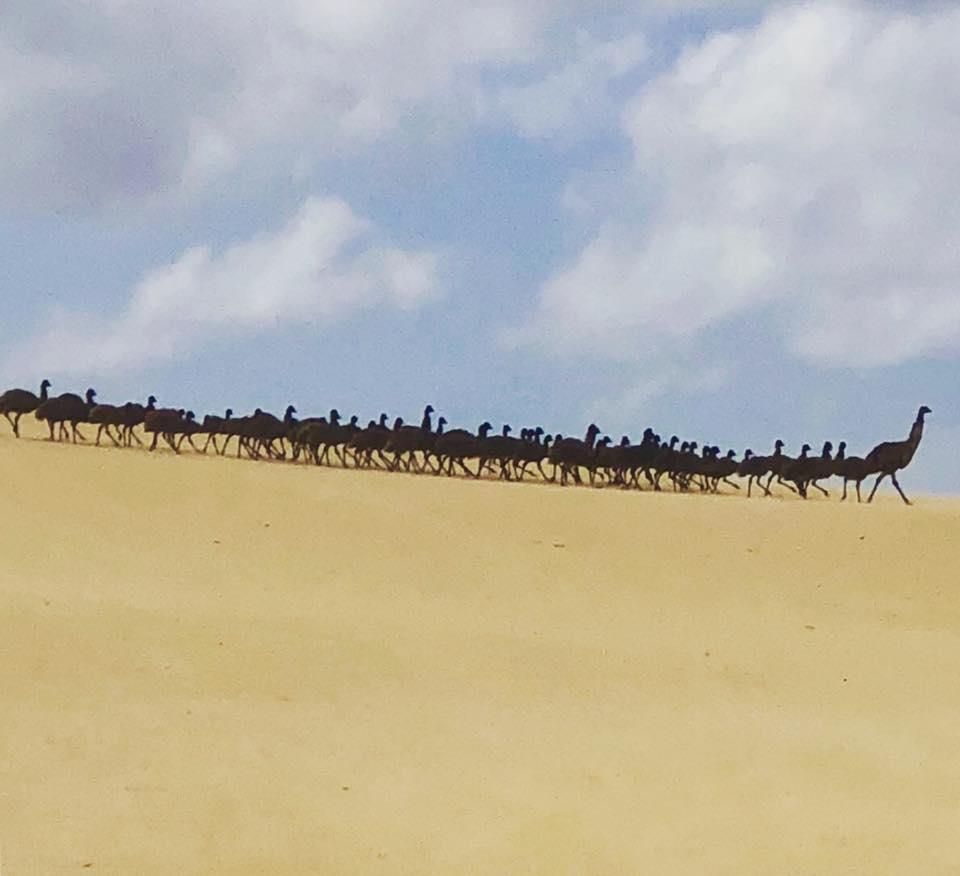 PostMarch-Emu