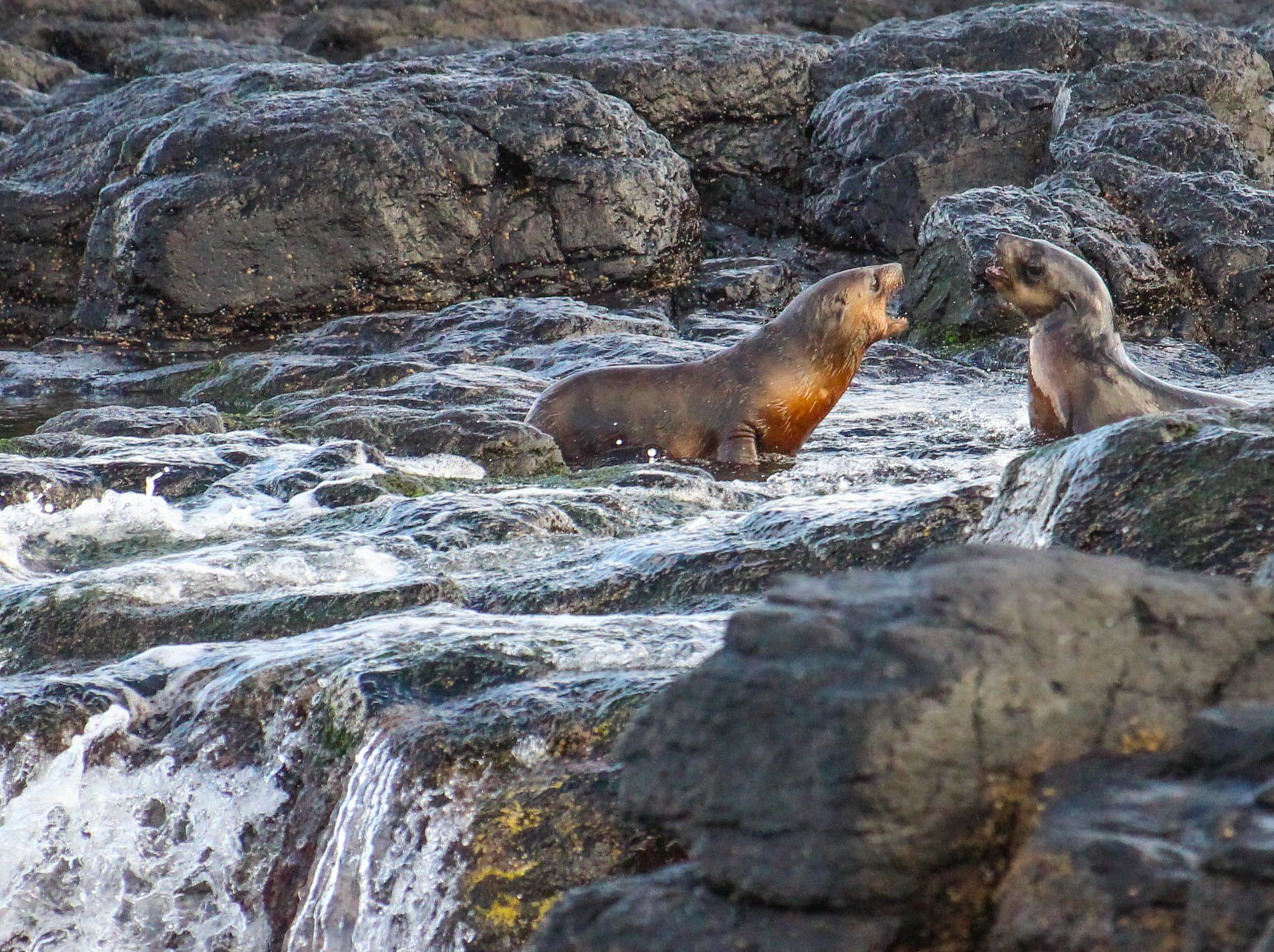 Wildlife Coast Cruises - April Blog May