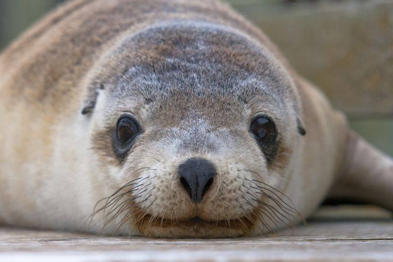 Exceptional Kangaroo Island - Blog Post May