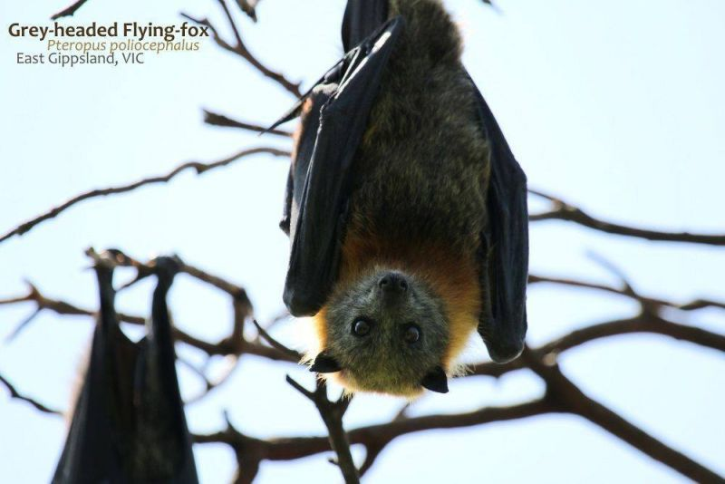 Flying Fox - July blog