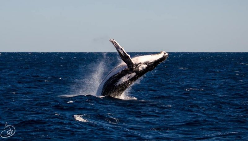 Humpback Whale - July blog