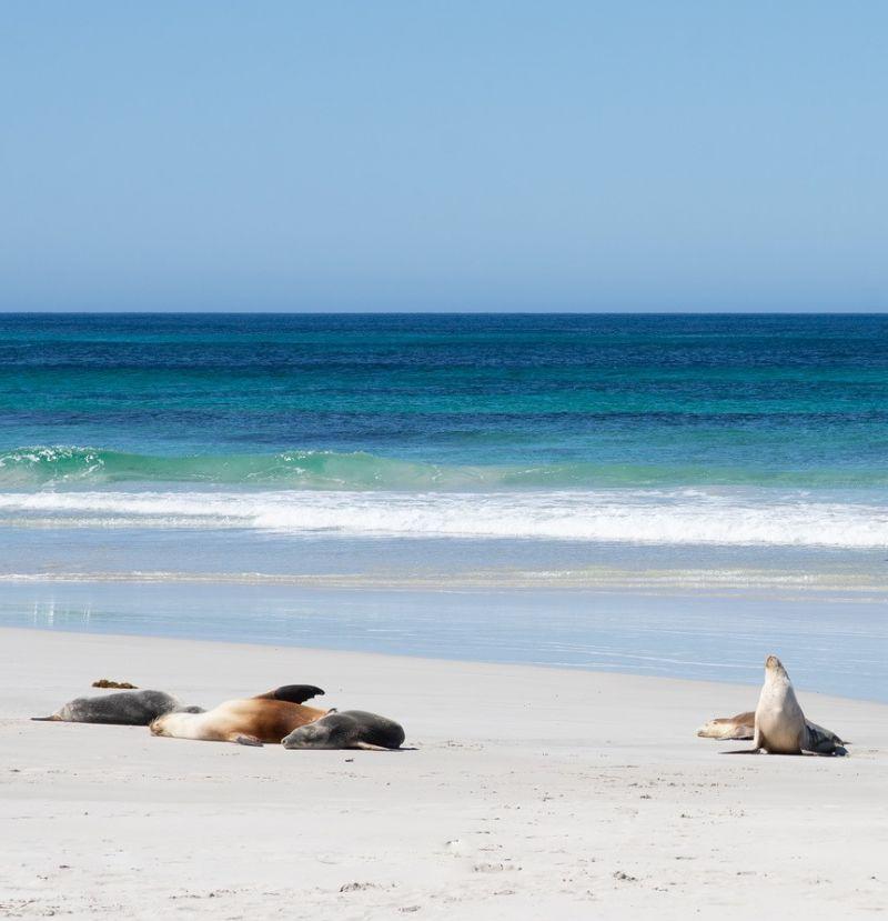 Seal Bay - July blog