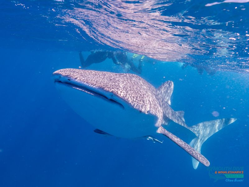 WhaleShark-October19Blog