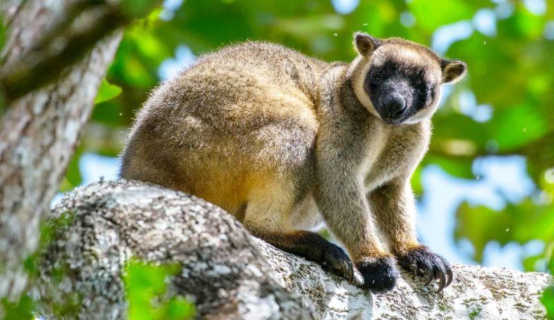 TreeKangaroo-OctoberBlog
