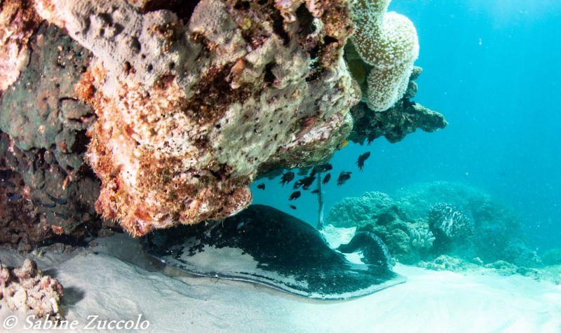 Ningaloo Reef - blog