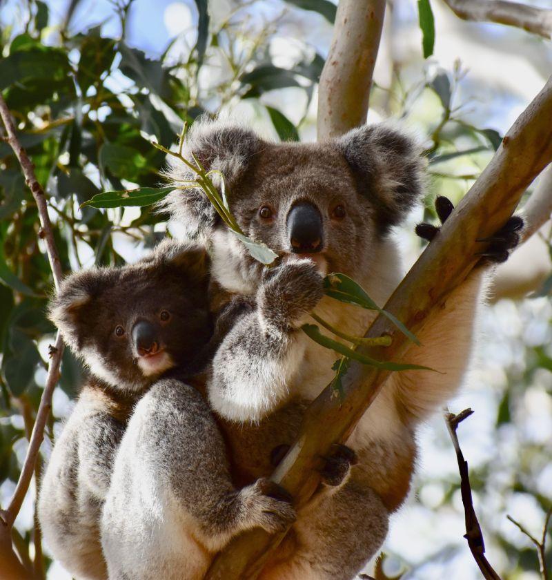 Koala EKI - blog