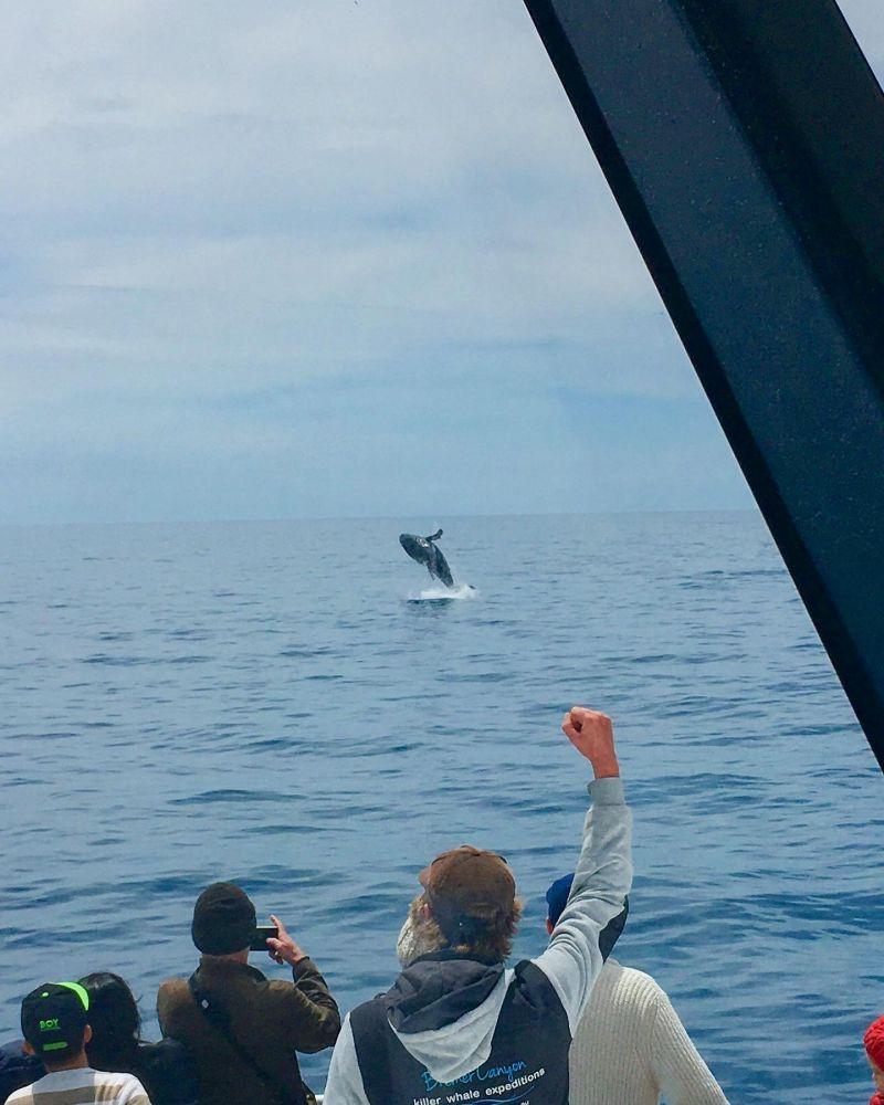Humpback Whale - November blog