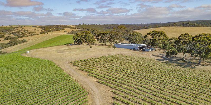 Islander Estate Vineyards - The Vineyard