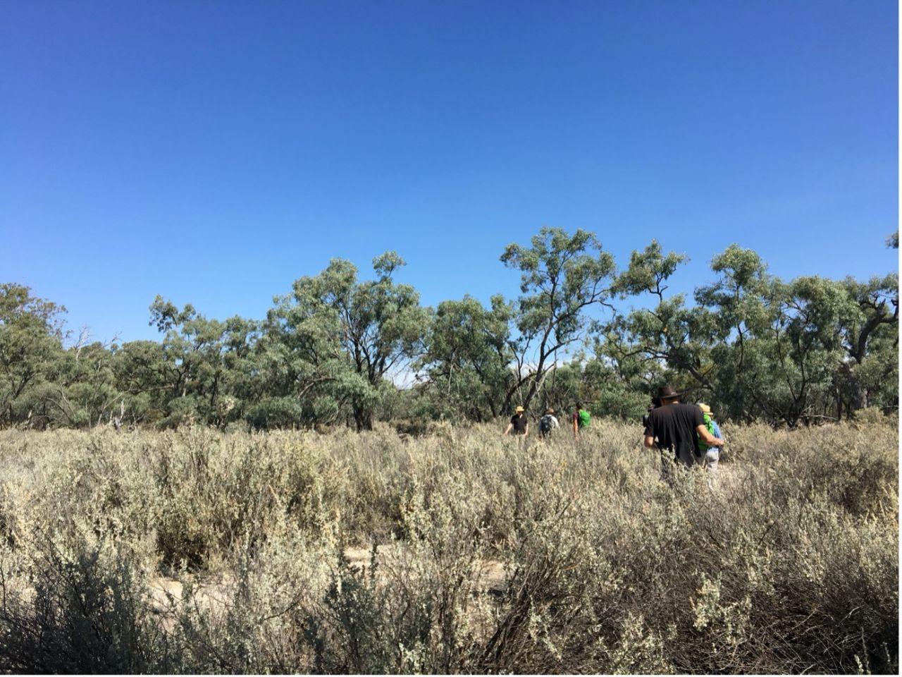 Murray River Landscapes 02