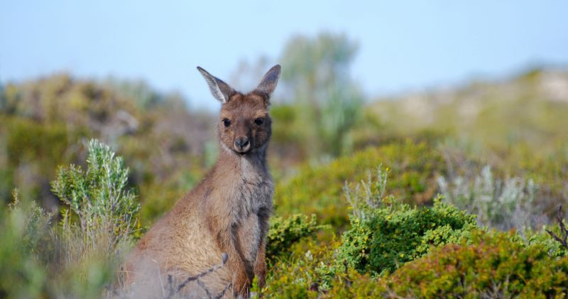 Eyre Peninsula Region - Hero 02