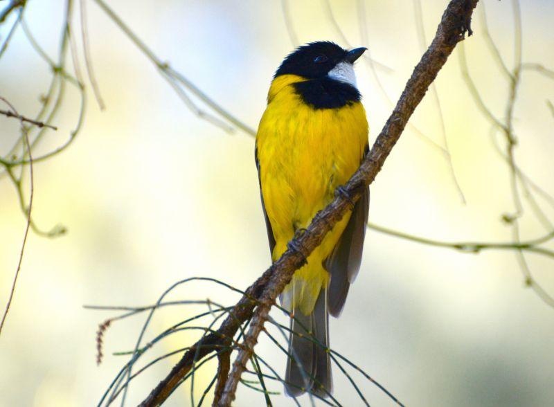 Eyre Birding - Day One