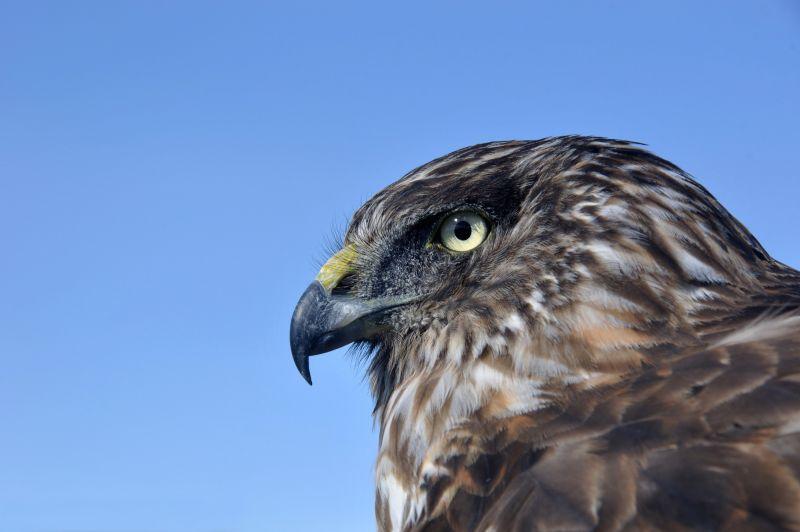 Eyre Birding - Hero 03
