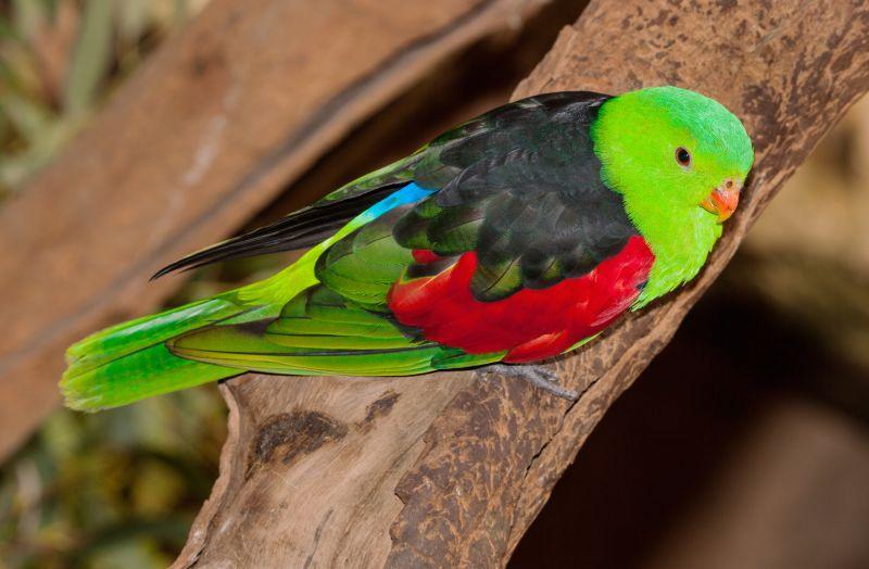 Kakadu Birding - Autumn 02