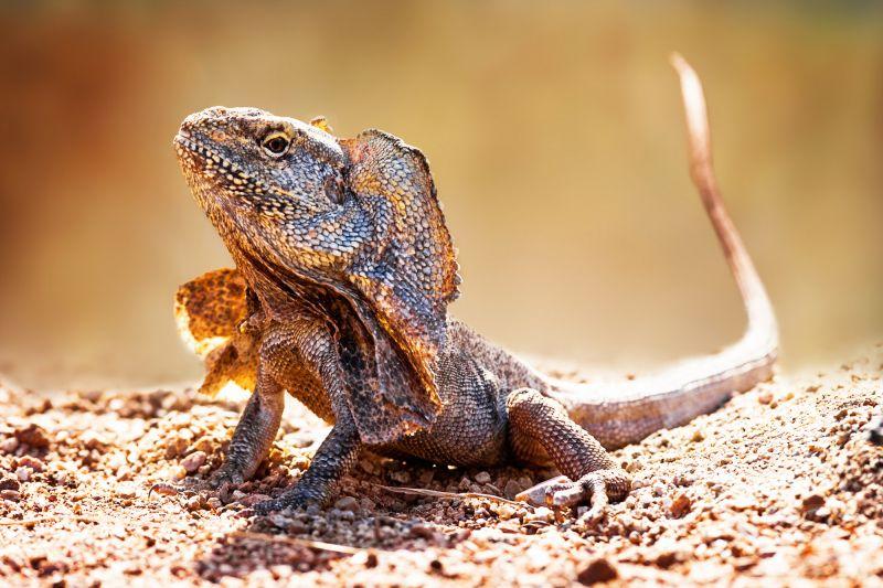 Kakadu Reptiles - Autumn 02