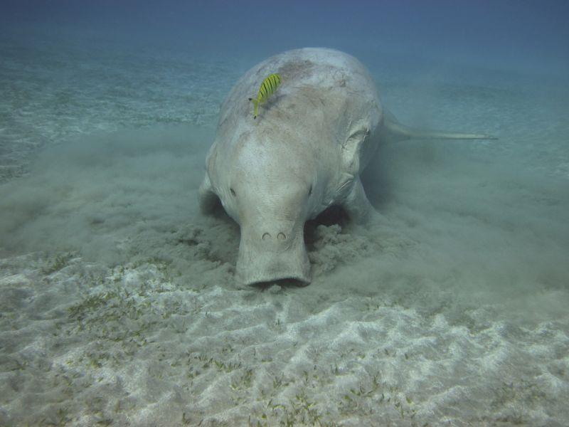 Exmouth Marine Mammals - Summer 01