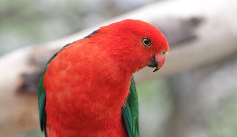 East Gippsland Birding - Spring 05