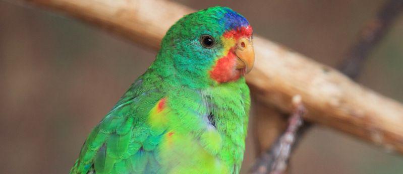 Maria Island Birds - Spring 05