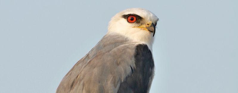Eyre Peninsula Birding - Summer 05