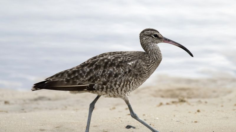 Kangaroo Island Birds - Summer 05