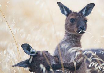 Kangaroo Island - Blog Summer