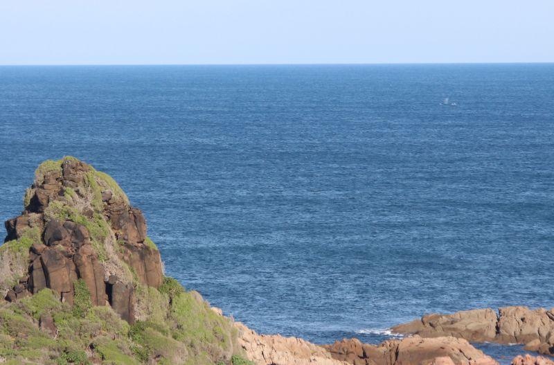 Wildlife Coast Cruises - Whale Blog 02