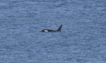 Wildlife Coast Cruises - Whale Blog 03